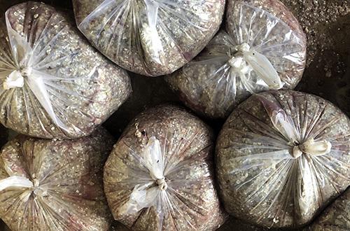 Vải cá tại một cơ sở làm khô cá lóc ở xã Phú Thọ, huyện Tam Nông, tỉnh Đồng Tháp. Ảnh: Cửu Long  - VAI CA DEP 2 2539 1562921284 - Thương lái thu gom vảy cá ở miền Tây