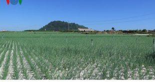 Sốt chuyển nhượng đất nông nghiệp ở Lý Sơn  - photo1567239797712 1567239798088 crop 1567239822435679945018 310x165 - Sốt chuyển nhượng đất nông nghiệp ở Lý Sơn