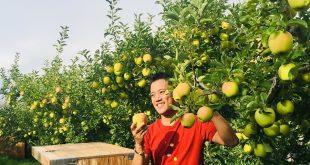Doanh nhân Việt sang Mỹ học cách trồng táo, cherry  - 718296775272888180664382470496 7030 3824 1570616161 1200x0 310x165 - Doanh nhân Việt sang Mỹ học cách trồng táo, cherry