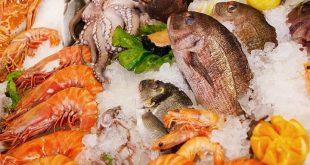 Xuất khẩu tôm, cá tra, mực, bạch tuộc giảm  - seafoodfoodhealthyseafreshf 15 8054 3315 1570291335 1200x0 310x165 - Xuất khẩu tôm, cá tra, mực, bạch tuộc giảm
