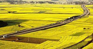 Ninh Bình chuyển mục đích sử dụng hơn 78ha đất tại tỉnh Ninh Bình  - 4214yytnn 15803757409522016317223 crop 1580375747467231466392 310x165 - Ninh Bình chuyển mục đích sử dụng hơn 78hecta đất tại tỉnh Ninh Bình