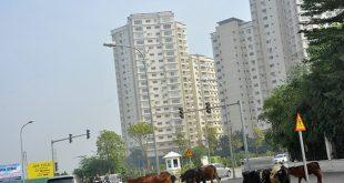 Thanh tra về đất đai loạt dự án bất động sản 'khủng' ở Hà Nội  - photo1583115593381 1583115594139 crop 15831156117851225391895 310x165 - Thanh tra về đất đai loạt dự án BĐS 'khủng' ở HN