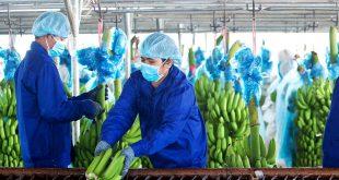 Thaco lần đầu có doanh thu nông nghiệp  - 201905130821442144157301646571 3541 8269 1587804929 1200x0 310x165 - Thaco lần đầu có doanh thu nông nghiệp