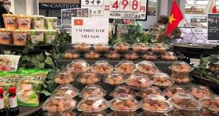 Đại gia bán lẻ Nhật tăng xuất khẩu nông sản Việt  - vai 1593236864 4873 1593236948 1200x0 310x165 - Đại gia bán lẻ Nhật tăng xuất khẩu nông sản Việt