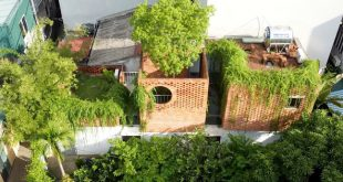 Ngôi nhà 64 m2 tại Hà Nội như một khu vườn với rau và cây ăn trái  - photo1613635982792 16136359830431755626516 310x165 - Ngôi nhà 64 m² tại HN như một khu vườn với rau và cây ăn trái